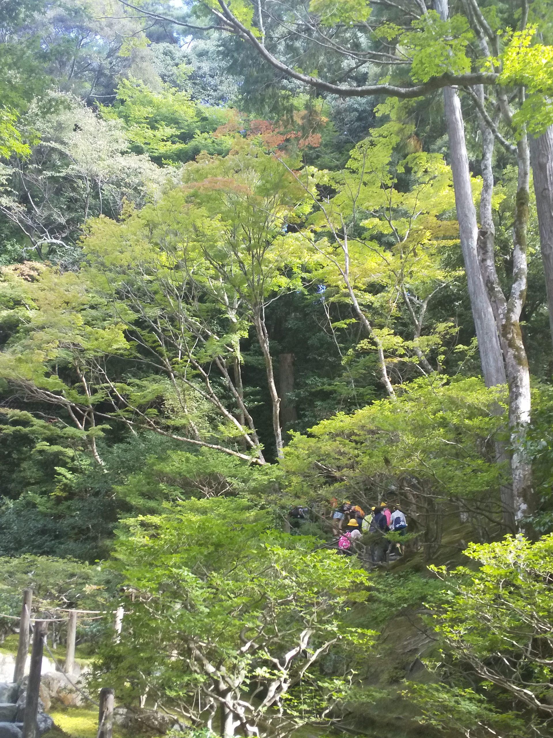 銀閣寺 庭園3