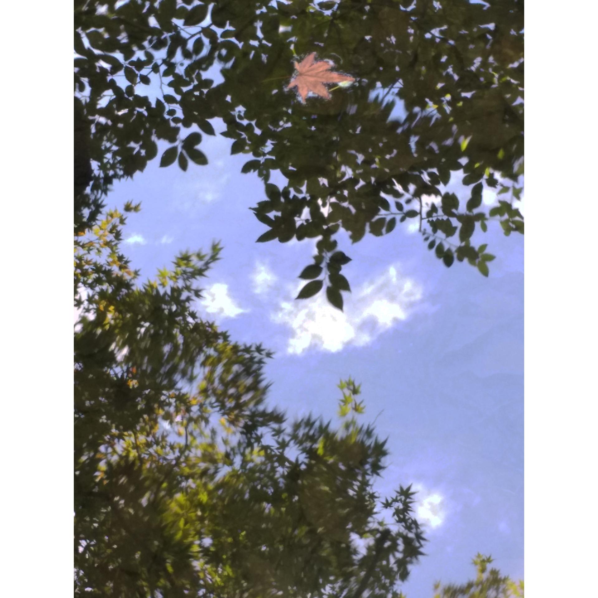天授院 池紅葉