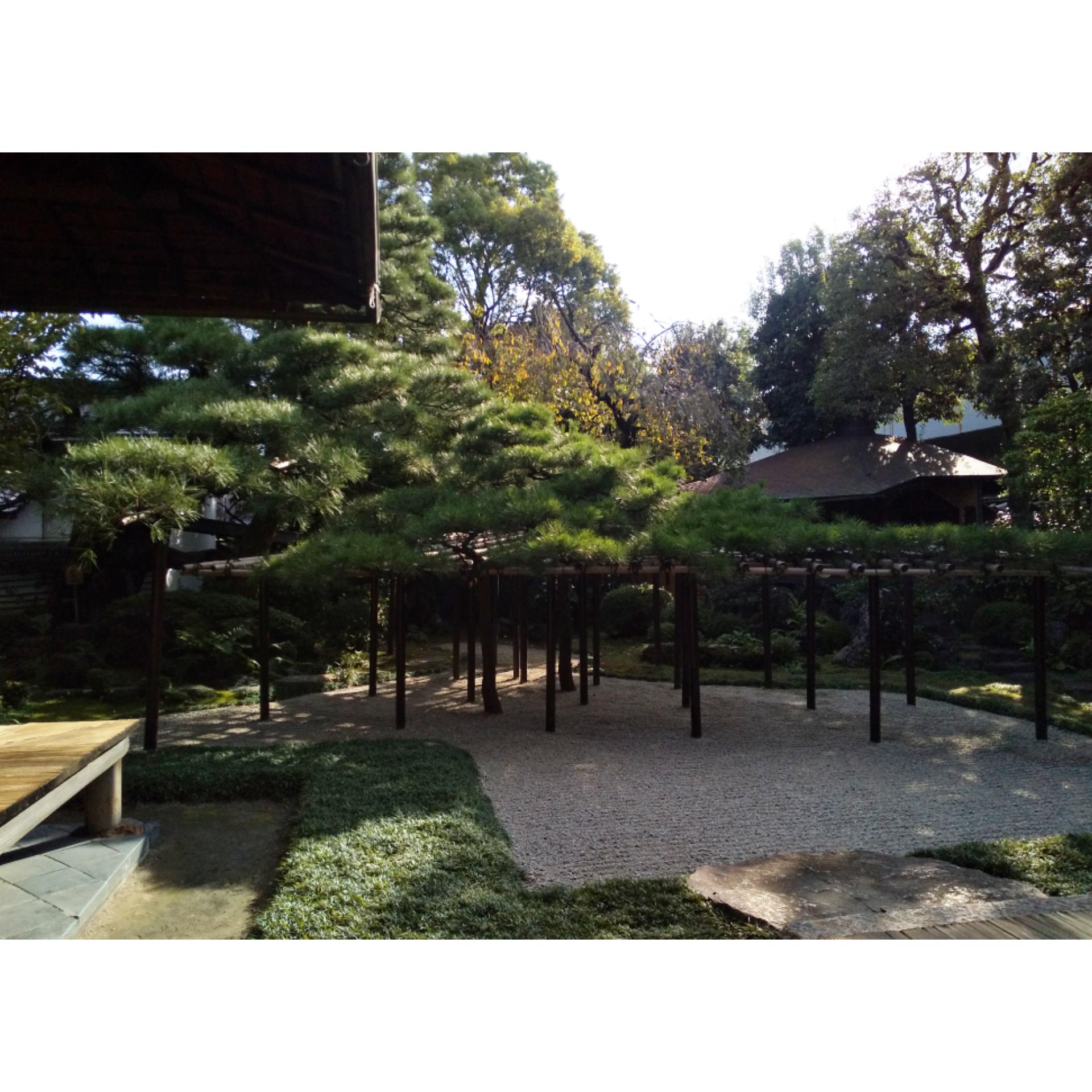 角屋 臥龍松の庭